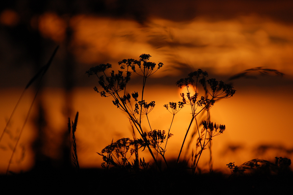 aquecimento_global_sunset